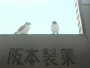 nichijou_birds